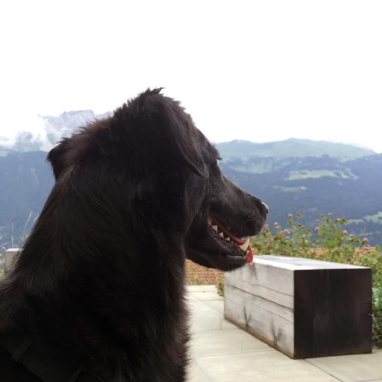 Schmackofatzo.de_Unterwegs_in_der_Schweiz_Teil_1_8